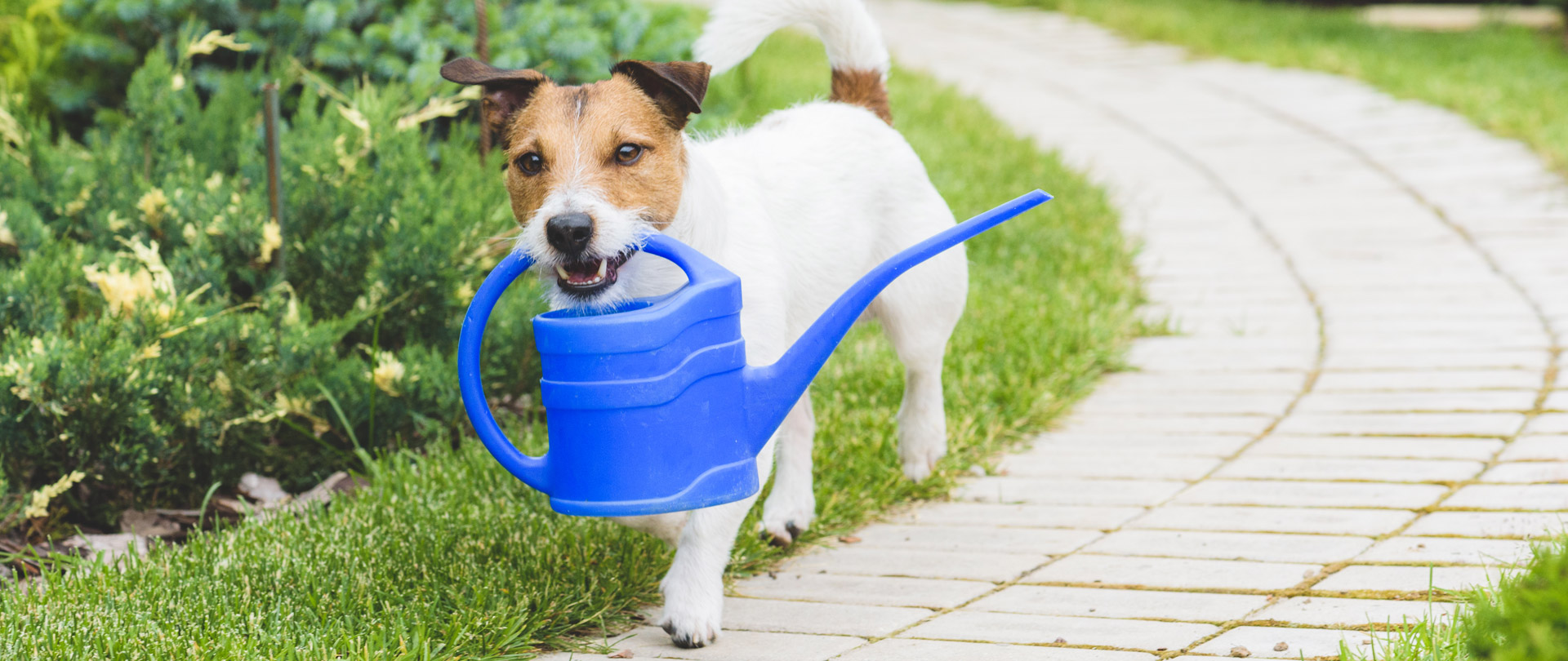Dog and Watering Can
